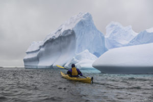 Kayaking in Antarctica (c) Florian Ledoux (2018)